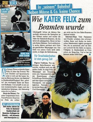 Kedi Felix Interrail Turkiye