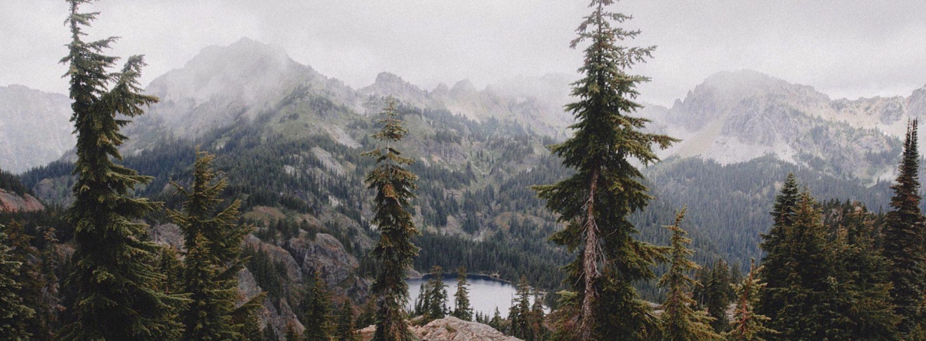 Neden kaçıyoruz ormandan ?